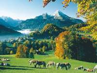 Allemagne - montagnes, chevaux dans le pré - m ......................