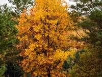 Color change - Golden raisin among greenery