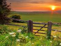 Meadow, sunset - Meadow And Fence, Sunset