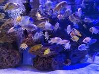 Ozeanarium - Puzzle für ein Mädchen, das bunte Fische liebt.