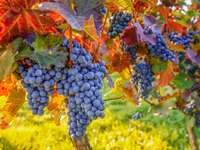 Viticulture in Sicily - Viticulture in Sicily
