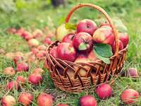 collected apples to the basket