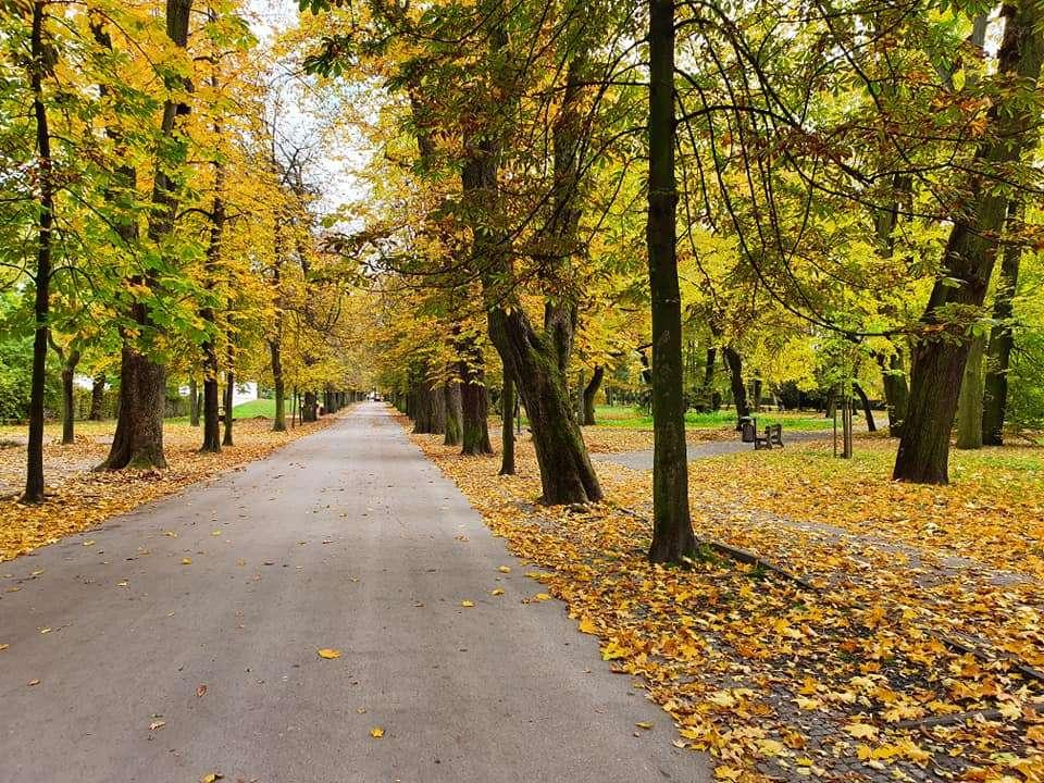Herbstgasse - Spaziergang in der Herbstsaison (13×10)