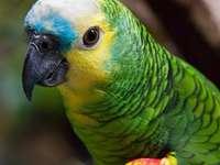 Пъзел за папагали - Смеете ли да решите този пъзел?