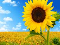 SUN TOUR - For children, sunflower, world, ecology, garden, care, environment, puzzle