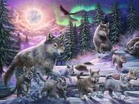 animali della foresta