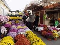 stalls with chrysanthemums - m ..........................
