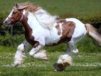 cavalo galopando - lindo cavalo galopando