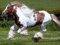 galloping horse - beautiful galloping horse