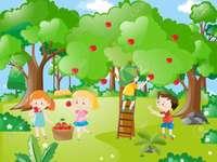 Almát szedő gyerekek