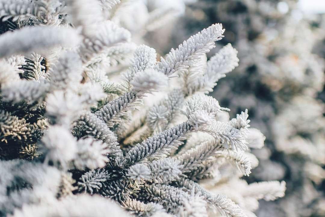 Rami degli alberi coperti di neve