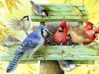vogels in de feeder