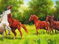 cavalos no prado - cavalos da natureza natureza