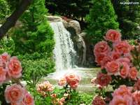 view - nature waterfall roses
