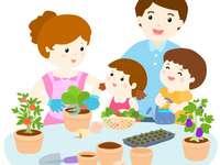 family plant
