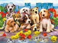 hundar bland blommorna nära staketet