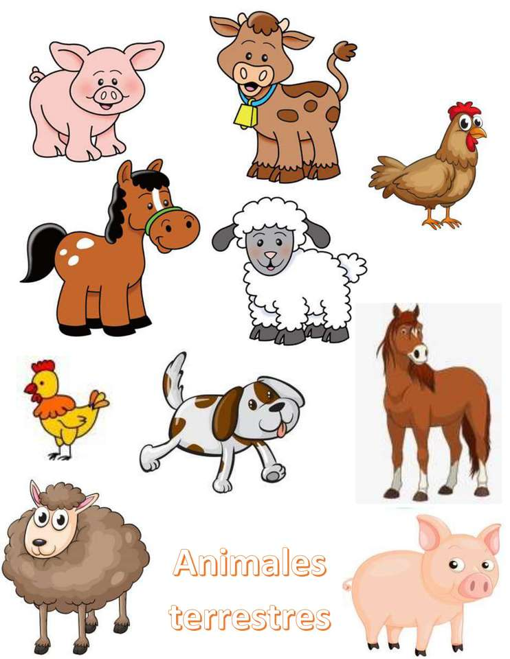 Animale terestre
