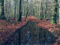 Water pond in the forest - In autumn in the forest