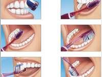 étapes pour me brosser les dents - Les élèves doivent compléter le puzzle suivant dans lequel ils ordonneront la bonne façon de se