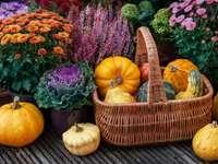 Őszi dekoráció sütőtökkel és növényekkel