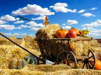 Pumpkins on straw and chickens