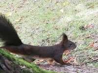 Esquilo - Aqui está um pequeno esquilo doce