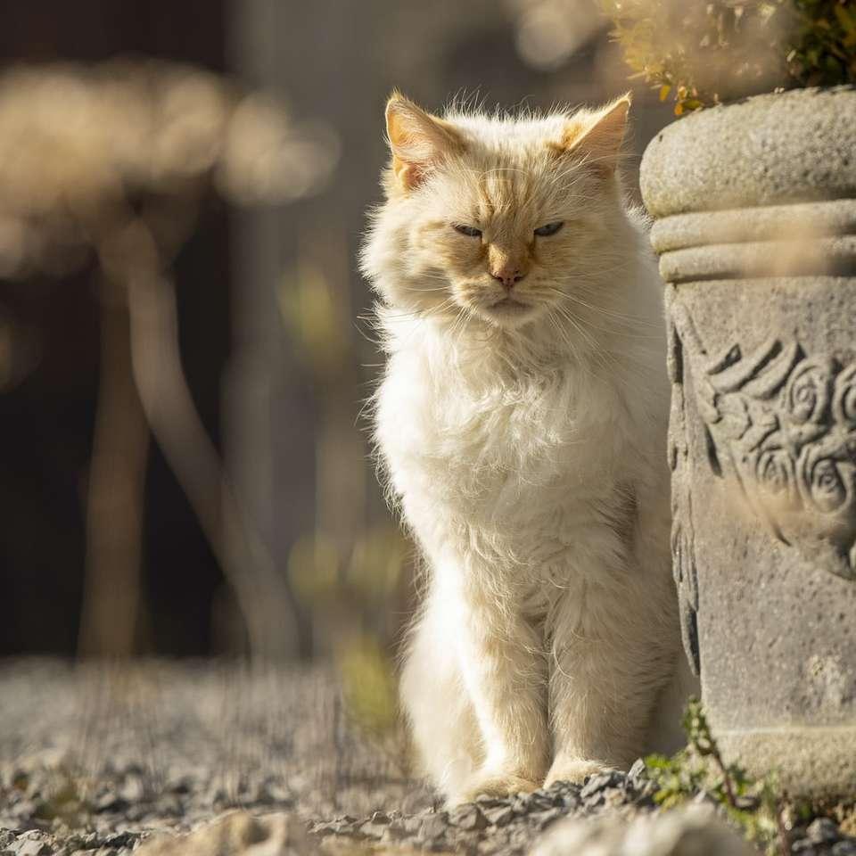 Gato blanco y marrón sentado sobre una superficie de hormigón gris