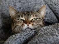 bruine Cyperse kat op grijs textiel