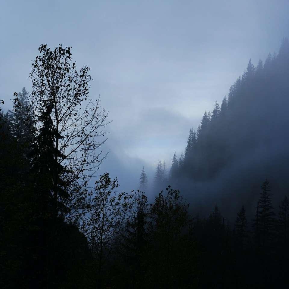 zelené a hnědé stromy pod zamračenou oblohou - Mlha za soumraku (Rogers Pass, Britská Kolumbie, Kanada). Rogers Pass, BC, Kanada (5×5)