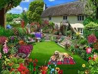 Casa com jardim e cães