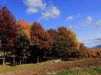 Colores Calitri del otoño