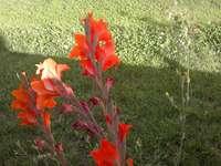 Градина в Саяго.