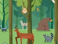 Floresta Cíclica - Elementos da biodiversidade, flora e fauna da floresta.