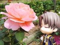 Hasebe adora flores