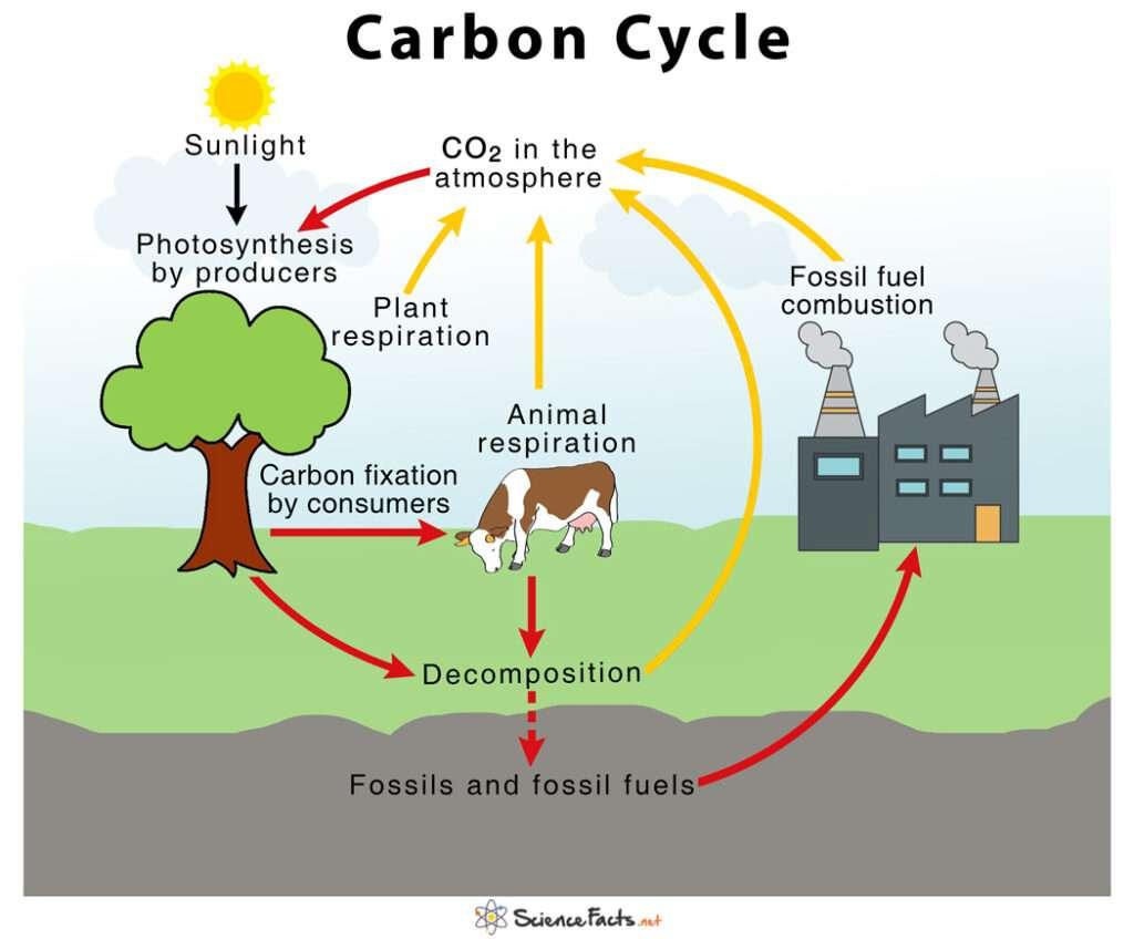 Ciclo de Carbono - O carbono pode ser encontrado em todos os seres vivos. Neste quebra-cabeça, você reconstruirá uma imagem do Ciclo do Carbono (2×2)