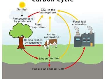 Uhlíkový cyklus