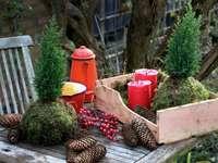 Градинарство през зимата - Градинарство през зимата