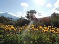 Εθνικό Πάρκο Conguillio