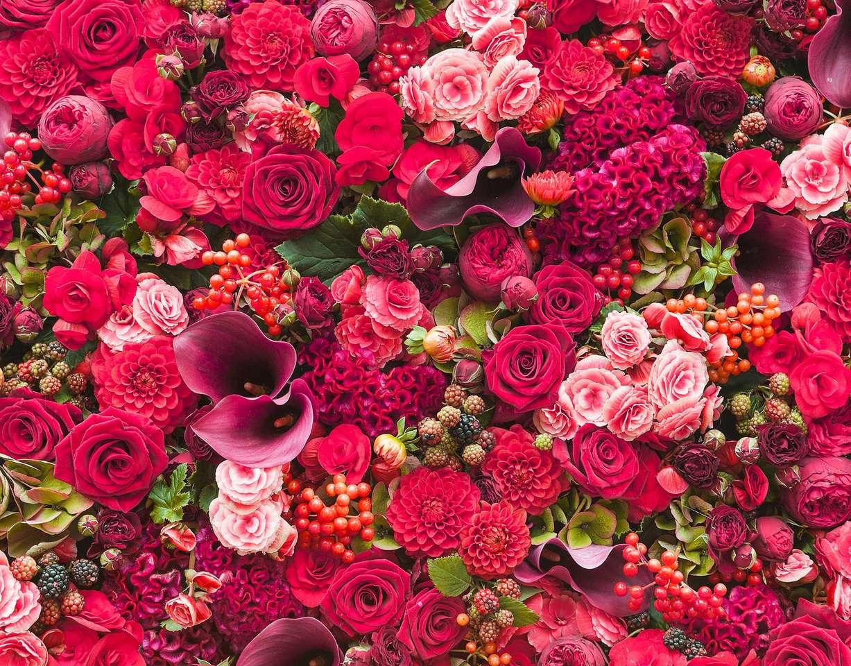 krásné červené a růžové růže (15×12)