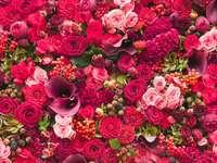 krásné červené a růžové růže