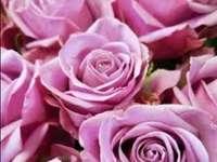 obrázek krásné růžové růže - obrázek krásné růžové růže