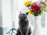 Ruská modrá kočka stojící poblíž keramická váza