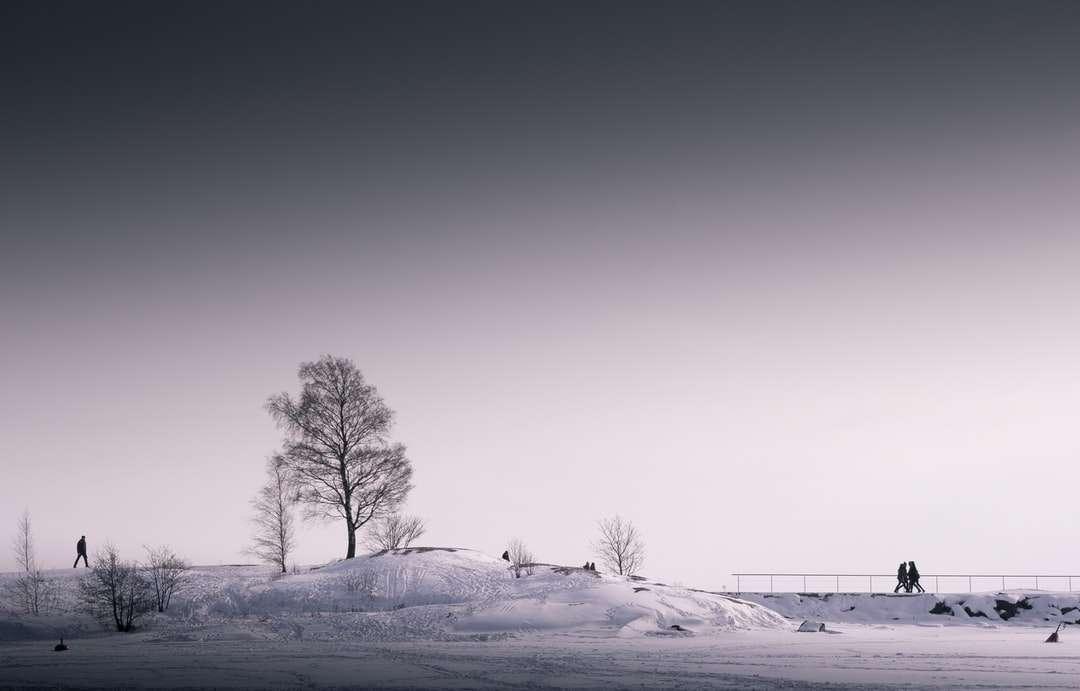 strom pod šedou oblohou - Zimní procházky. Helsinky, Finsko (12×8)