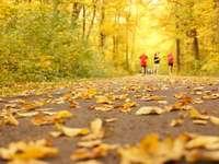 folhas marrons no chão - A folhagem de outono cobre um caminho frequentado por pessoas correndo na floresta Steigerwald em Er