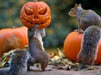 esquilo de halloween
