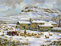Winter landscape farm with sheep