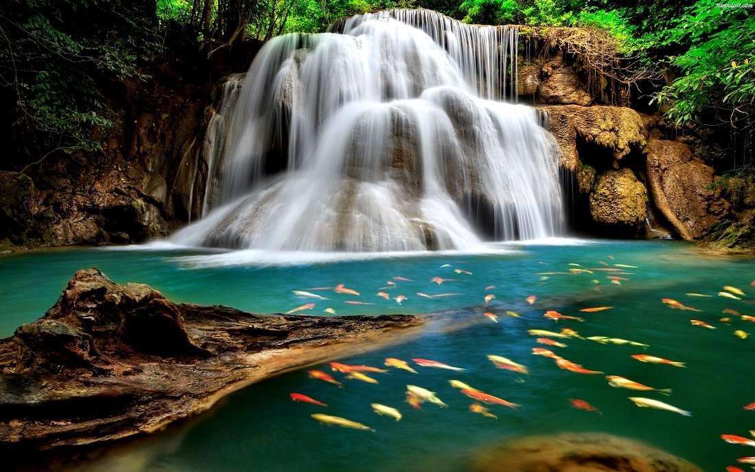 изглед - природа водопад цветни риби (11×7)