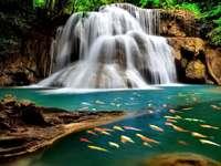 Visão - peixes coloridos cachoeira natural