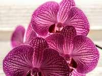 Pink flowers - Beautiful rice flower. ???