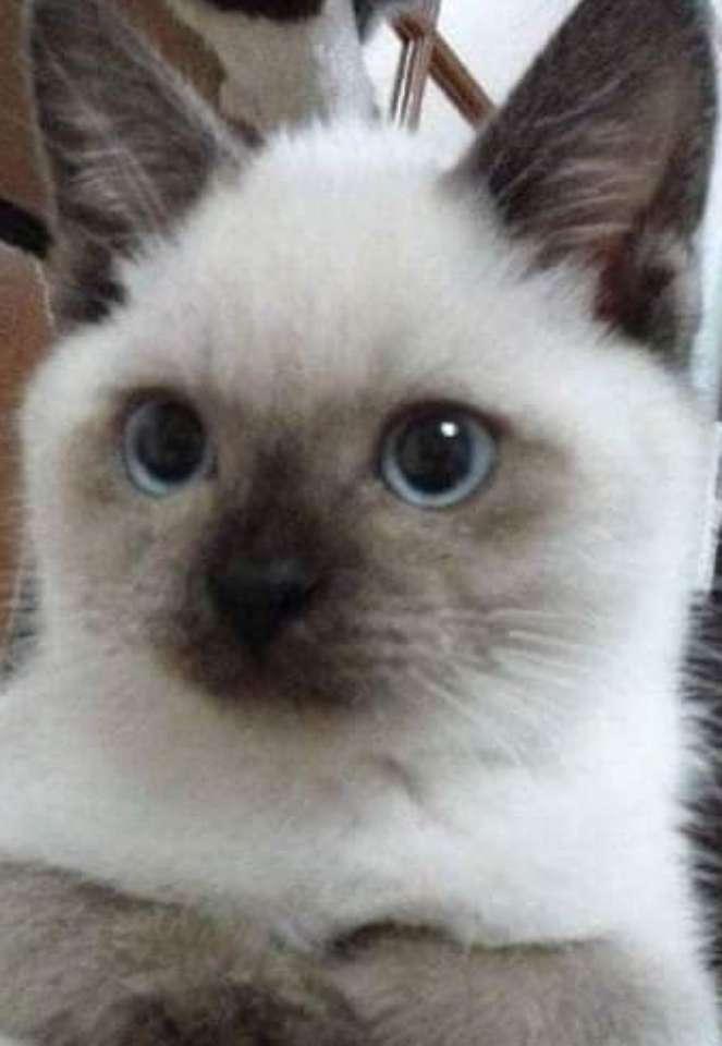 Ασπρη γάτα ?